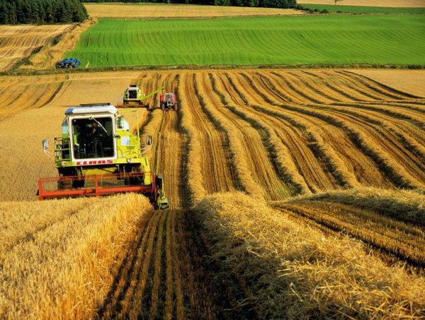 В агропромисловому комплексі України реалізується 474 інвестпроекти -  Держзовнішінформ ДП